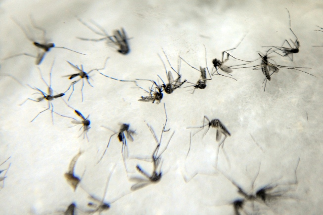 Casos de dengue disparam em Assis e vários bairros são afetados