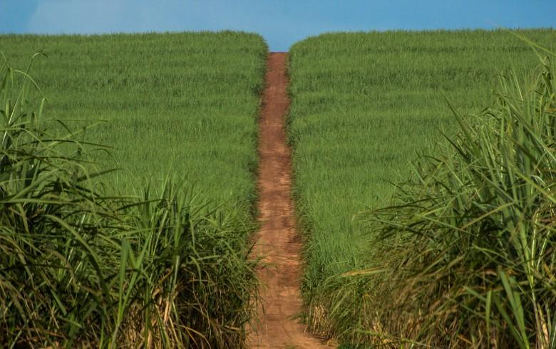 Conab divulga levantamento sobre a safra 2018/2019 de cana-de-açúcar e etanol e empresário rural analisa os dados