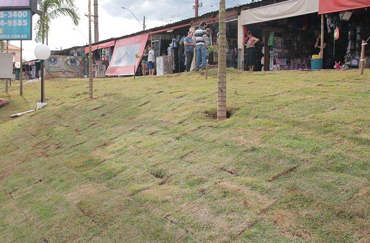 Com novo paisagismo e mudas de ipês e palmeiras, Prefeitura revitaliza área verde do Camelódromo